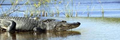 Everglades Restoration-J^ Pat Carter-Photographic Print