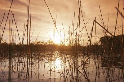 Everglades Swamp at Sunset-Buena Vista Images-Photographic Print