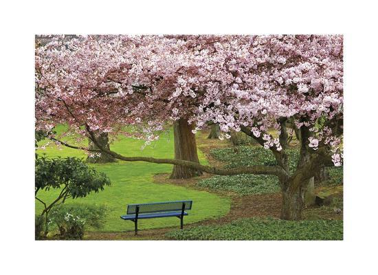Evergreen Park-Donald Paulson-Giclee Print
