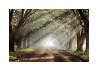 https://imgc.artprintimages.com/img/print/evergreen-plantation_u-l-f5o8ko0.jpg?p=0