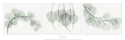 https://imgc.artprintimages.com/img/print/evergreen-triptych_u-l-f1kq080.jpg?p=0