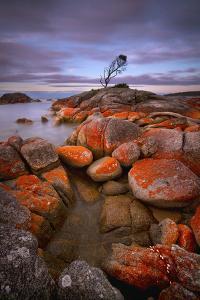 Binalong Bay by Everlook Photography