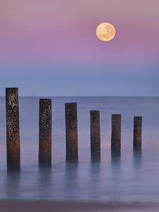 Moana Moon by Everlook Photography