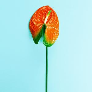 Red Flower Calla. Minimalism Style Fashion by Evgeniya Porechenskaya
