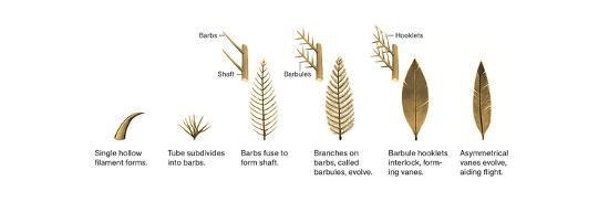 Evolution of the First Feathers-Xing Lida-Giclee Print
