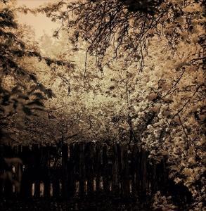 Blossoms in Bloom by Ewa Zauscinska