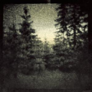 Blurred Forest by Ewa Zauscinska