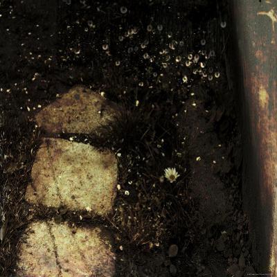 Dandelions along Stone Path