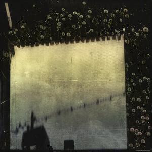 Dandelions and Blurred Barn by Ewa Zauscinska