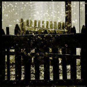Fencing Gate with Shadowed Dandelions by Ewa Zauscinska