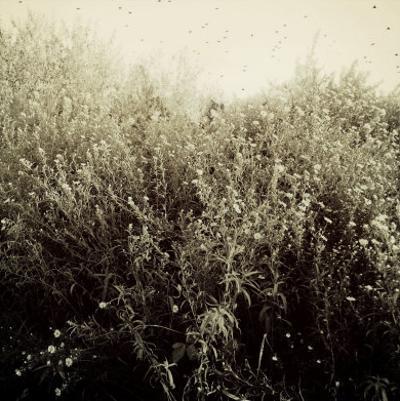 Overgrown Flowers