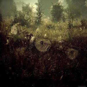 Spiderwebs in Field by Ewa Zauscinska