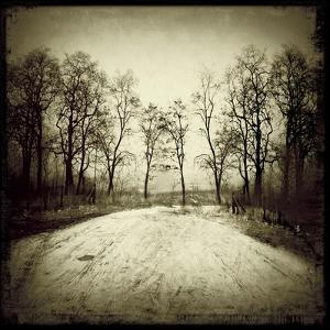 Tracks into Field by Ewa Zauscinska