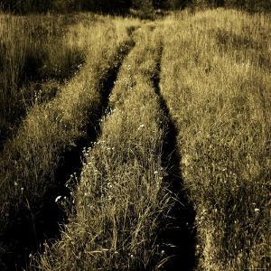 Tracks through a Field by Ewa Zauscinska