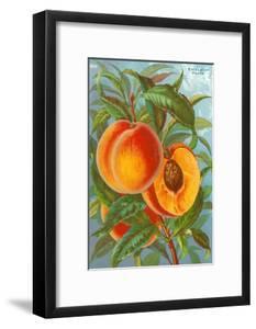 Excelsior Peach