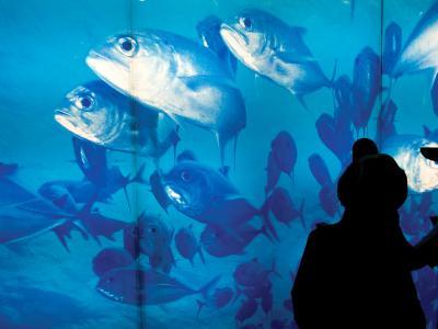 Excited School Children Gazing at Fish at Osaka Aquarium-Antony Giblin-Photographic Print