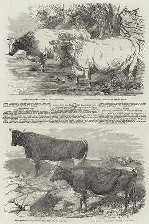Exhibition of the Royal Agricultural Society of England-Harrison William Weir-Giclee Print
