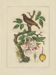 Exotic Bird and Botanical II
