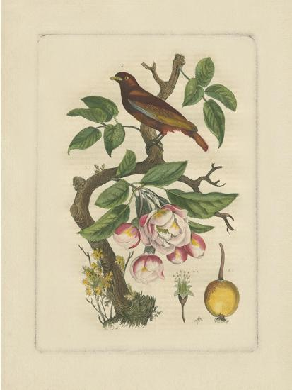 Exotic Bird and Botanical II--Art Print
