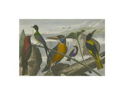 Exotic Bird I--Art Print