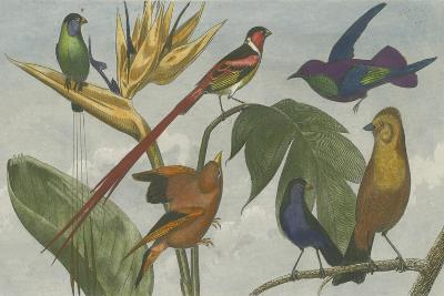 Exotic Bird III--Art Print