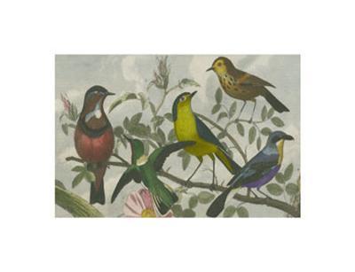 Exotic Bird VI--Art Print