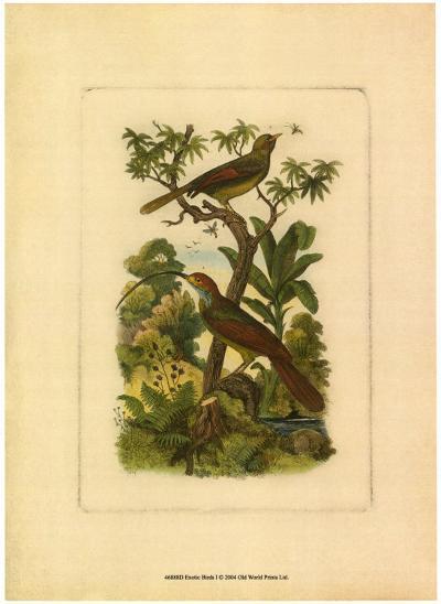 Exotic Birds I--Art Print