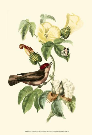 Exotic Birds I-Georges Cuvier-Art Print