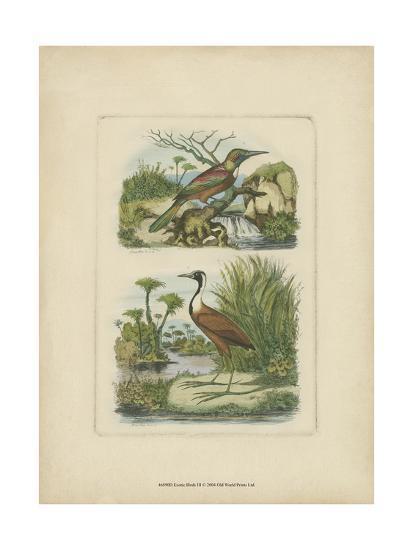 Exotic Birds III-Vision Studio-Art Print