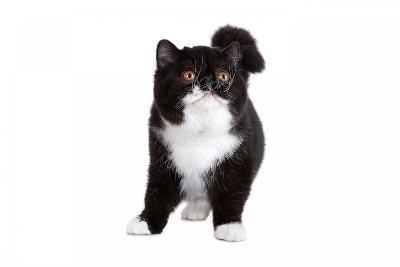 Exotic Cat-Fabio Petroni-Photographic Print