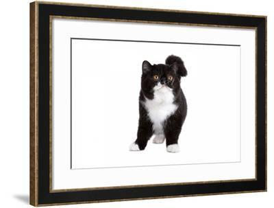 Exotic Cat-Fabio Petroni-Framed Photographic Print
