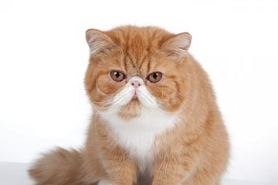 https://imgc.artprintimages.com/img/print/exotic-cat_u-l-pzs8wv0.jpg?p=0