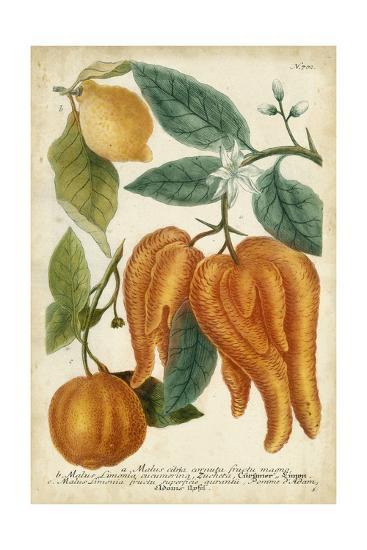 Exotic Citrus I-Weinmann-Art Print