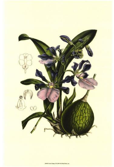 Exotic Foliage IV--Art Print