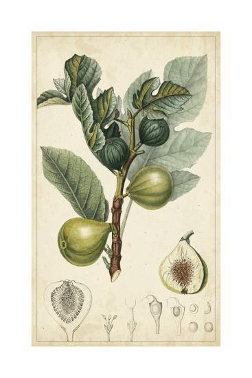 Exotic Fruits I-Turpin-Art Print