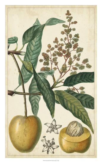 Exotic Fruits III-Turpin-Giclee Print