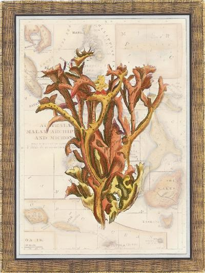 Exotic Map with Coral II-Debbie Bookman-Art Print