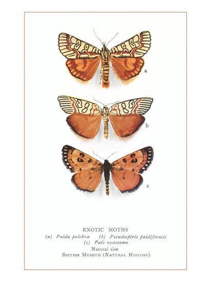 Exotic Moths--Art Print
