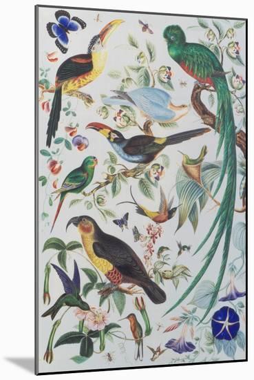 Exotic Parrots, c.1850-John James Audubon-Mounted Premium Giclee Print