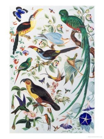 https://imgc.artprintimages.com/img/print/exotic-parrots-c-1850_u-l-p22kbj0.jpg?artPerspective=n