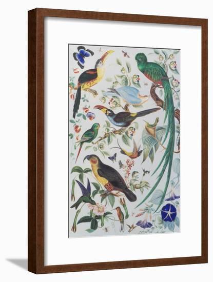 Exotic Parrots, c.1850-John James Audubon-Framed Giclee Print