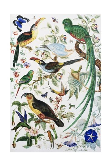 Exotic Parrots--Giclee Print