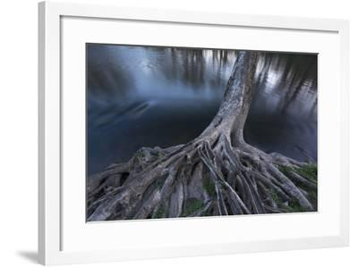Exposed Roots of a Sycamore Tree at the Brandywine River Museum-Michael Melford-Framed Photographic Print