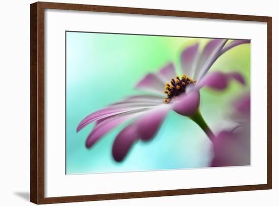 Extending In The Morning Light II-Heidi Westum-Framed Photographic Print