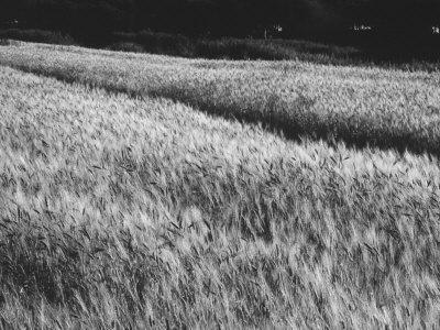 https://imgc.artprintimages.com/img/print/extent-of-wheat_u-l-q10t1qq0.jpg?p=0