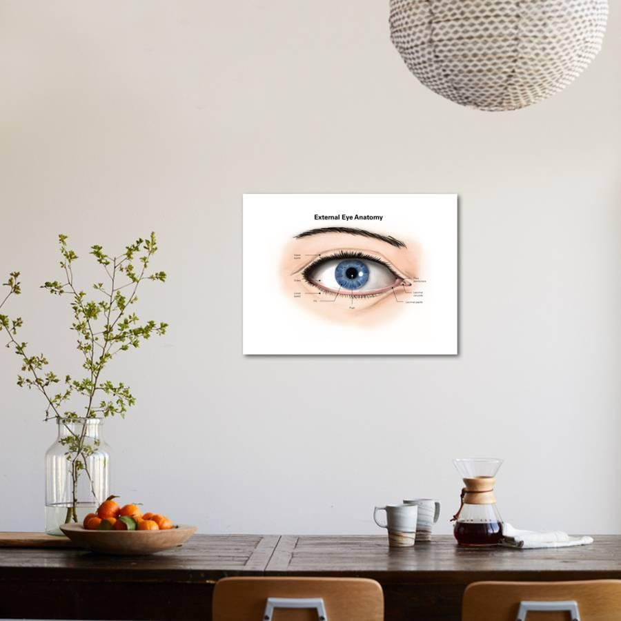 External Anatomy Of The Human Eye With Labels Art Print By Art