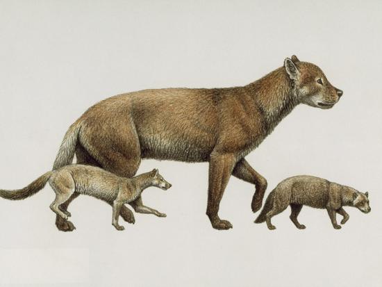 Extinct Dog Ancestors Archaeocyon, Phlaocyon, and Borophagus-Mauricio Anton-Giclee Print