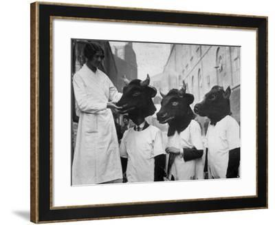 Extraordinary Cows--Framed Photographic Print