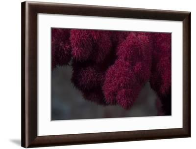 Extreme Close-Up of Soft Coral on a Fijian Reef-Stocktrek Images-Framed Photographic Print