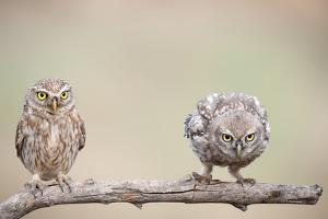 Curiosity of Chick by Eyal Amer